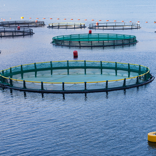 categorie_aquaculture_530x530_acf_cropped